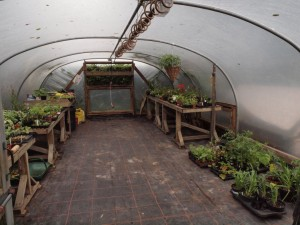 Polytunnel & Plant Stall