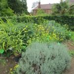 Herbal medicine bed at Bristol
