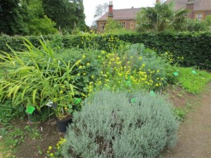 Herbal medicine bed at Bristol