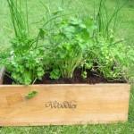 fines herbes box
