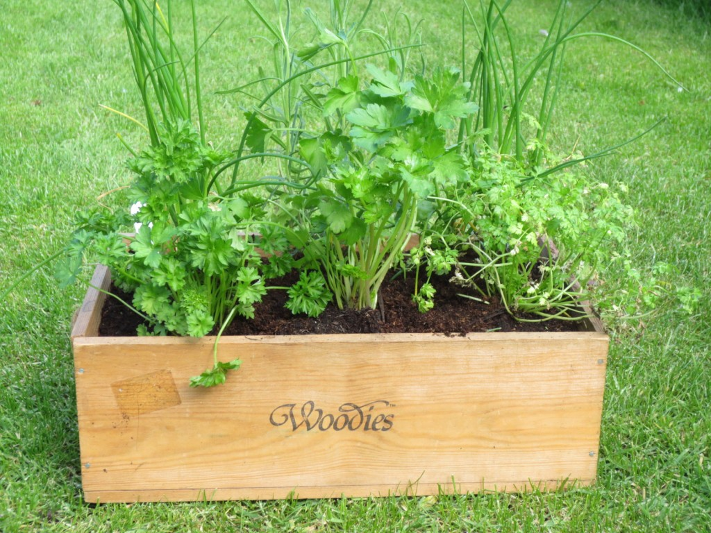 Growing and Using Herbs Workshop