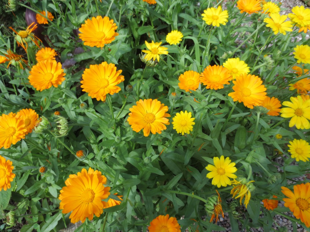 Edible Flowers – July 2019