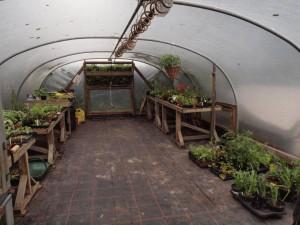 Polytunnel & Plant Stall