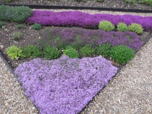 Herb bed at le Manoir
