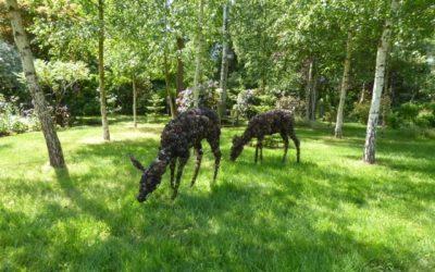 Guest Blog: A Woodland Walk