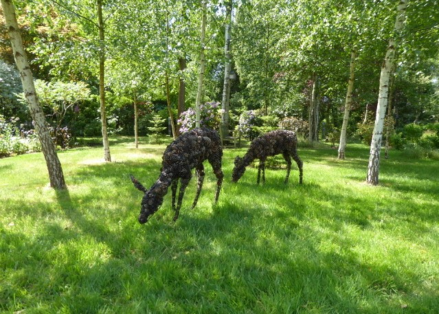 Guest Blog: A Woodland Walk